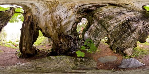 In einem alten Baum Nahe der Vögeialm 2011, 360 Grad Panorama